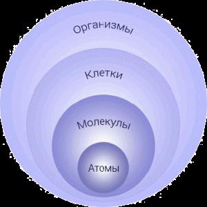 Рис. 3. Пример нормальной или естественной иерархии (или иерархии роста и развития).