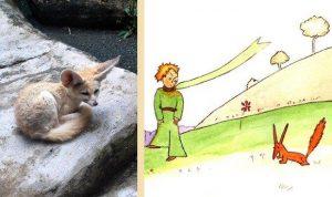 Необычно большие уши Лиса на рисунке Экзюпери, скорее всего, навеяны маленькой пустынной лисичкой фенек — одним из существ, прирученных писателем во время службы в Марокко.