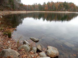 Рис.1. (а) Уолденский пруд (Walden Pond) в окрестностях города Конкорд, штат Массачусетс, США.